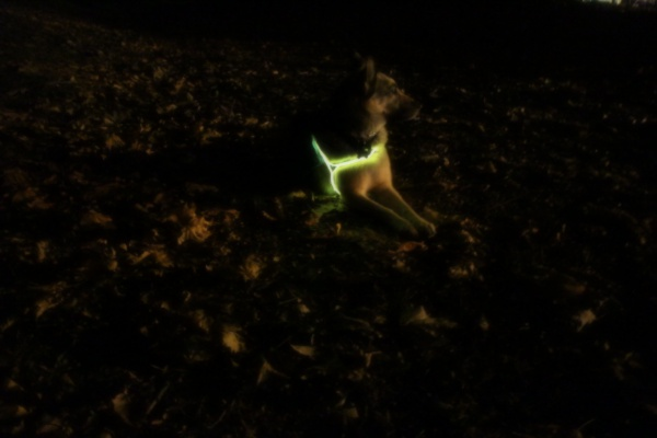 EL Wire Light-Up Dog Harness