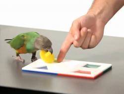 Teach Parrot Puzzle
